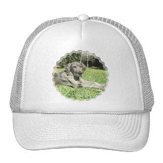 Great Dane Puppy Baseball hat