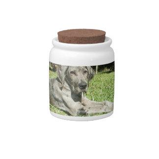 Great Dane Puppy Candy Jar