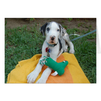 Great Dane puppy Cards
