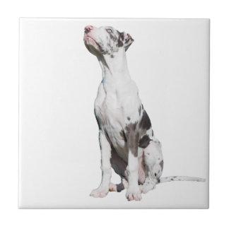 Great Dane puppy dog harlequin beautiful photo Tiles