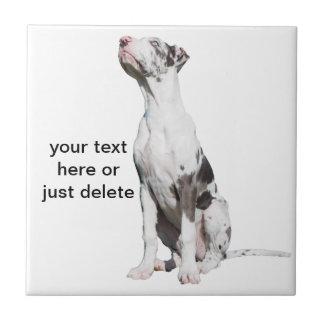 Great Dane puppy dog harlequin beautiful photo Ceramic Tiles