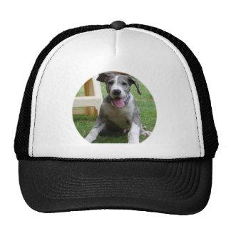 Great Dane Puppy Trucker Hat