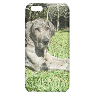 Great Dane Puppy iPhone Case iPhone 5C Case