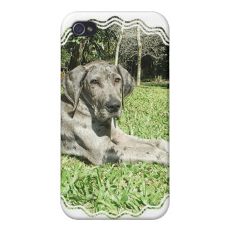Great Dane Puppy iPhone Case Cover For iPhone 4