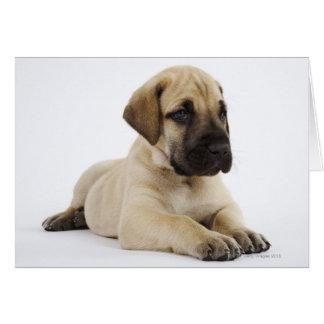 Great Dane puppy Lying in Studio Greeting Card