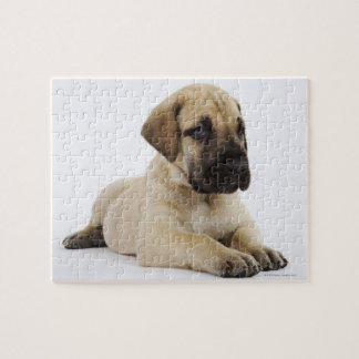 Great Dane puppy Lying in Studio Jigsaw Puzzle