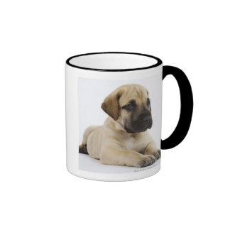 Great Dane puppy Lying in Studio Mug