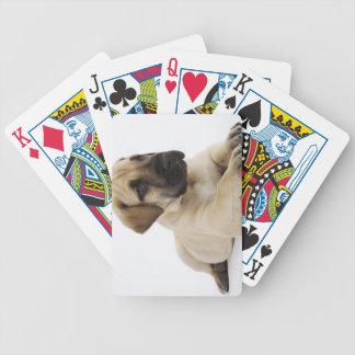Great Dane puppy Lying in Studio Poker Deck