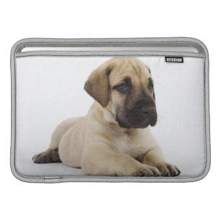 Great Dane puppy Lying in Studio Sleeve For MacBook Air