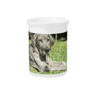 Great Dane Puppy Pitcher