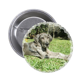 Great Dane Puppy Round Button