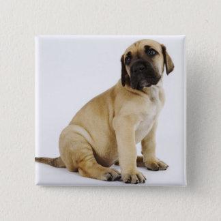 Great Dane Puppy Sitting in Studio 15 Cm Square Badge