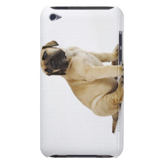 Great Dane Puppy Sitting in Studio Barely There iPod Cases