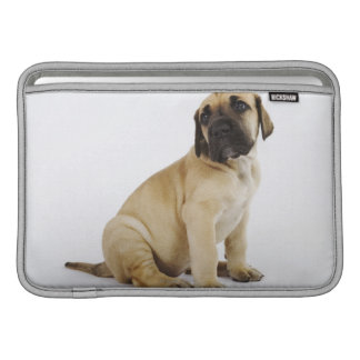 Great Dane Puppy Sitting in Studio MacBook Air Sleeve