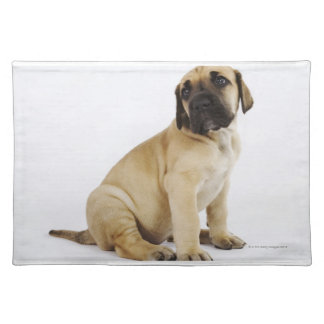 Great Dane Puppy Sitting in Studio Placemat