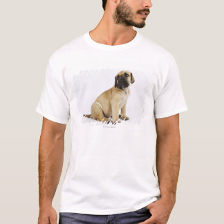 Great Dane Puppy Sitting in Studio T-Shirt