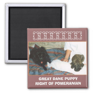 GREAT DANE PUPPY SQUARE MAGNET