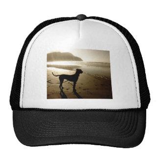 Great Dane Puppy Sunset Hat