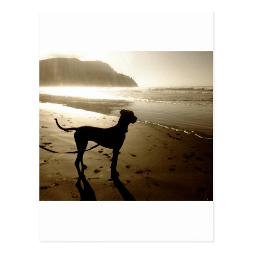 Great Dane Puppy Sunset Post Card