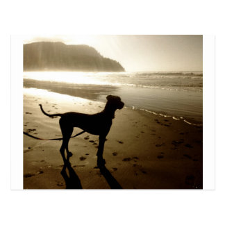 Great Dane Puppy Sunset Postcard