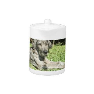 Great Dane Puppy Teapot