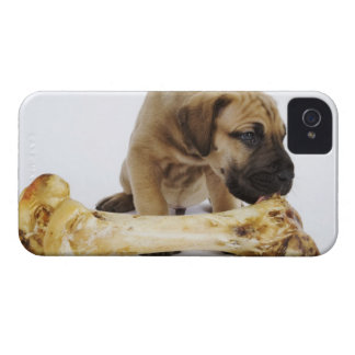 Great Dane puppy with bone in studio iPhone 4 Cases