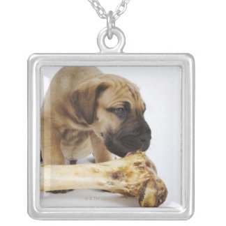 Great Dane puppy with bone in studio Silver Plated Necklace