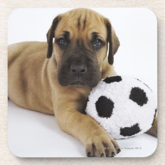 Great Dane puppy with toy soccer ball Beverage Coasters