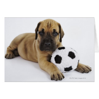 Great Dane puppy with toy soccer ball Greeting Cards