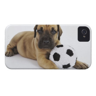 Great Dane puppy with toy soccer ball iPhone 4 Covers