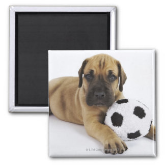 Great Dane puppy with toy soccer ball Square Magnet