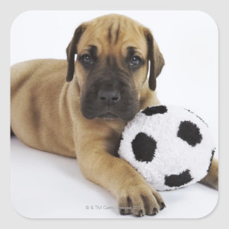Great Dane puppy with toy soccer ball Square Sticker