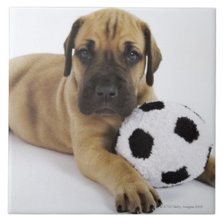 Great Dane puppy with toy soccer ball Tile
