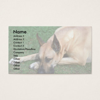 Great Dane resting Business Card
