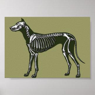 Great Dane skeleton Poster