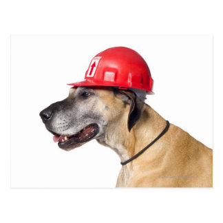 Great Dane wearing a red construction helmet Postcard