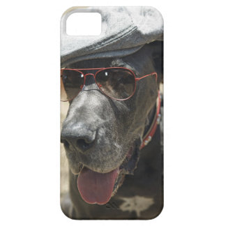 Great Dane wearing hat and sunglasses iPhone 5 Cases