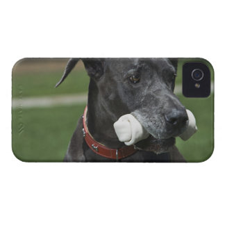 Great Dane with bone Case-Mate iPhone 4 Cases