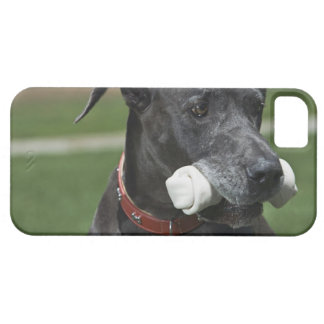 Great Dane with bone iPhone 5 Case