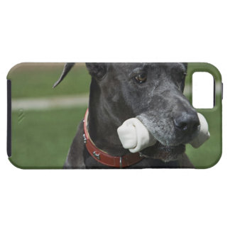 Great Dane with bone iPhone 5 Cases