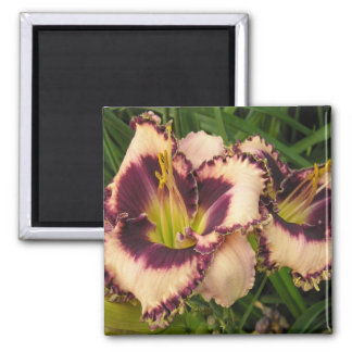 Great Daylily Magnet