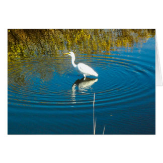Great Egret #3 Greeting Card