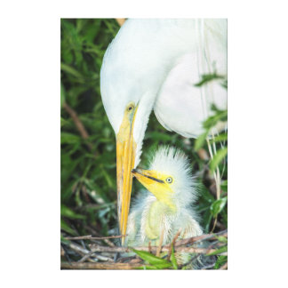 Great Egret and baby egret at Gatorland Canvas Print