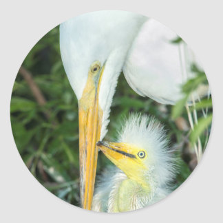 Great Egret and baby egret at Gatorland Classic Round Sticker