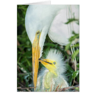 Great Egret and baby egret at Gatorland Greeting Card