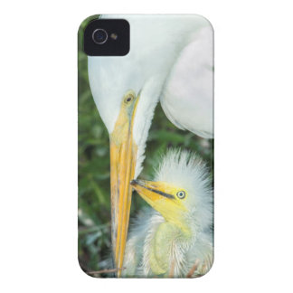 Great Egret and baby egret at Gatorland iPhone 4 Covers