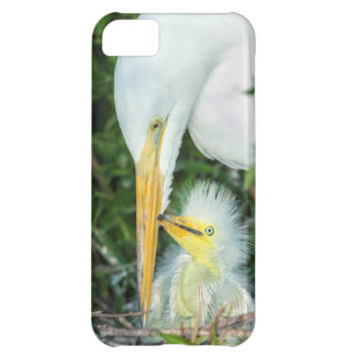 Great Egret and baby egret at Gatorland iPhone 5C Case