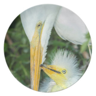 Great Egret and baby egret at Gatorland Plate
