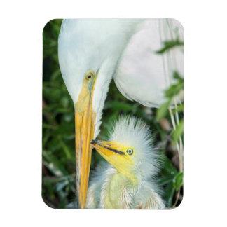 Great Egret and baby egret at Gatorland Rectangular Photo Magnet