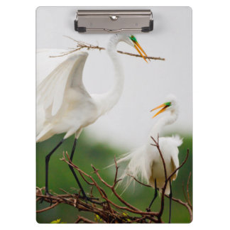 Great Egret (Ardea Alba) Breeding Activity Clipboard